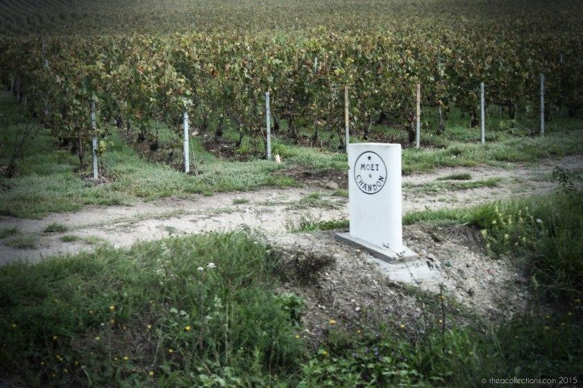 Moët & Chandon vineyards | Epernay, France